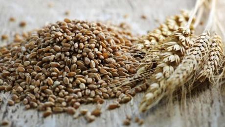 Обсяги експортних поставок зерна з України досягли понад 12 мільйонів тонн