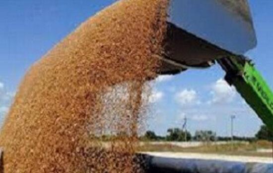 The Kirovograd region (Ukraine) has harvested 1 mln tons of grain