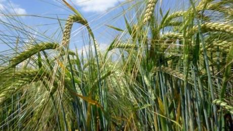 Экспорт зерновых культур из Украины достиг более 45 миллионов тонн