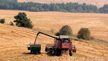 Ростовская область является лидером по сбору урожая зерновых в РФ