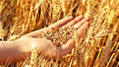 В Украине собрано более 200 тысяч тонн зерновых культур