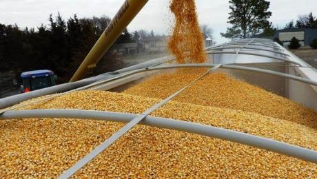 Обсяги експорту пшениці з України скоротилися на 8%