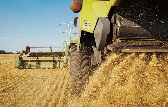 The quality of wheat in Russia is improving