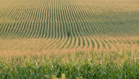 Осадки оказали благоприятные эффект на созревание зерна в Казахстане