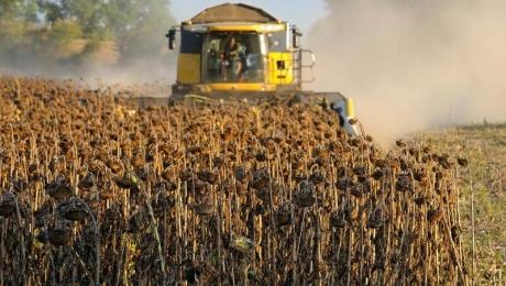 Можливе зростання врожаю соняшнику в Україні