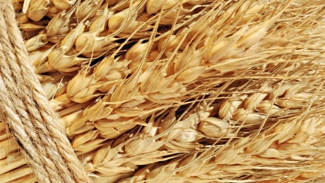 Ib Russia harvest volumes and wheat export increases