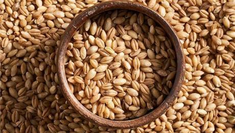 Експорт зернових з України досяг рівня в 33,8 мільйона тонн