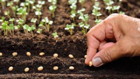 У Казахстані в Костанайській області під посіви відвели понад 5 мільйонів гектар