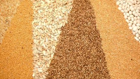 Україна входить до трійки світових експортерів зерна