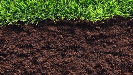 Сев яровых зерновых культур в Казахстане выполнен на 2,4%