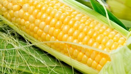 Зарубіжні поставки кукурудзи з України можуть досягти 29 мільйонів тонн