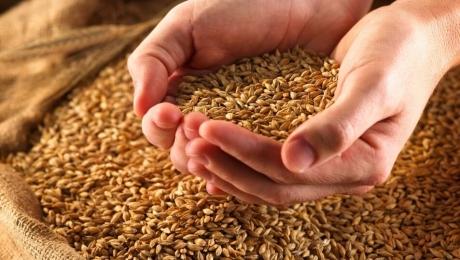 Експорт зерна з України з початку сезону склав більше 32 млн тонн