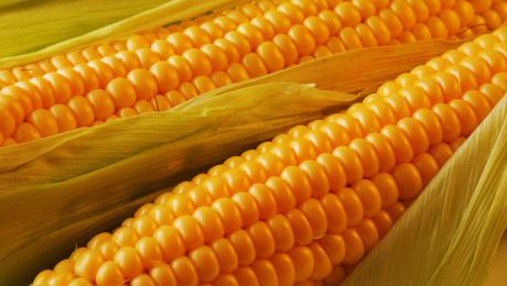 Поставки кукурузы из Украины увеличились в 1,7 раза