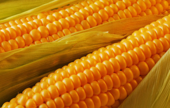 Supplies of corn from Ukraine increased by 1.7 times