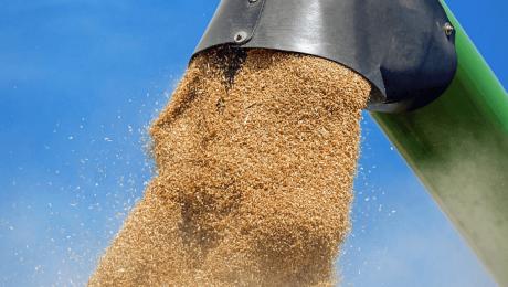 Врожай зернових культур 2018 у Казахстані склав 20 мільйонів тонн