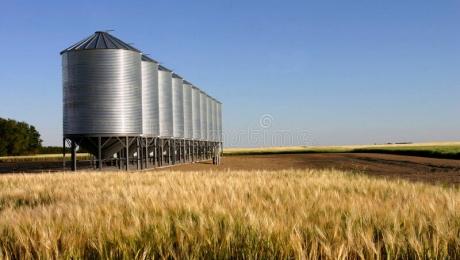 На 30 июля объем собранного урожая в Казахстане составил 797 тысяч тонн