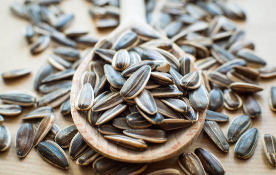 По состоянию на 1.01.2019 в закромах Казахстана находится более 1,6 миллиона тонн масличных семян