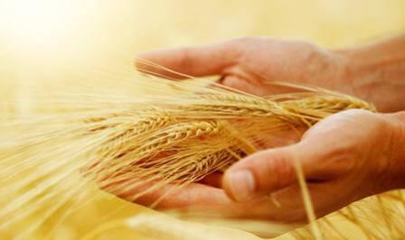 Законодательная база рынка зерна требует пересмотра