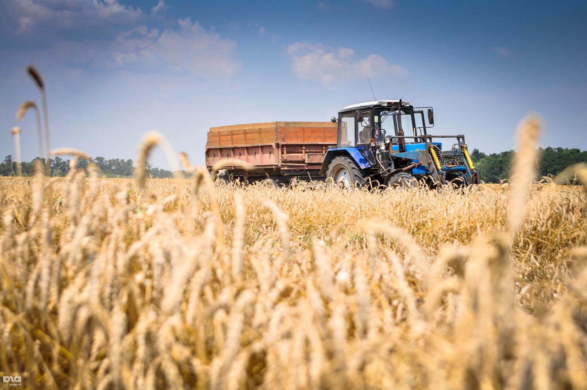 В период с июля по сентябрь 18/19 МГ экспорт пшеницы из Украины снизился на 11%