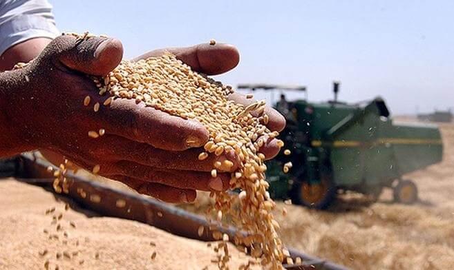 В текущем МГ экспорт зерновых из Украины сократился на 10%