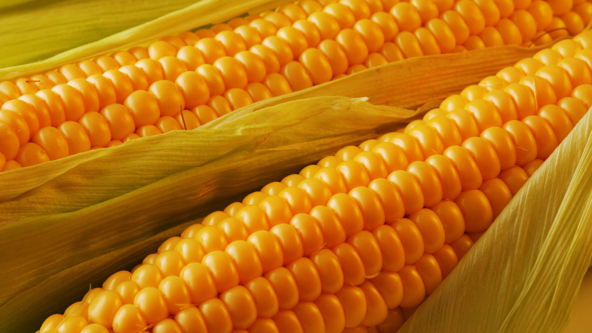 Поставки кукурудзи з України збільшилися в 1,7 разів