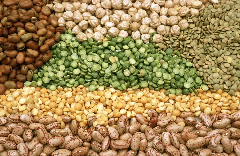 Количество зерновых и бобовых в зернохранилищах Костаная увеличилось, в сравнении с прошлым годом