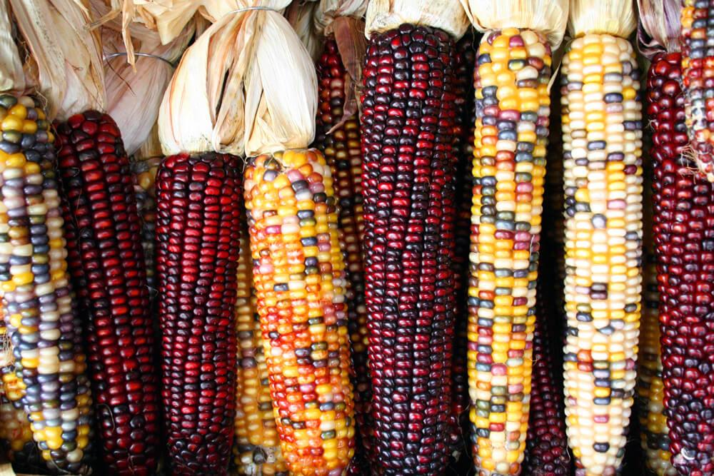 В течении месяца в Казахстане уменьшилось количество всех зерновых культур за исключением кукурузы