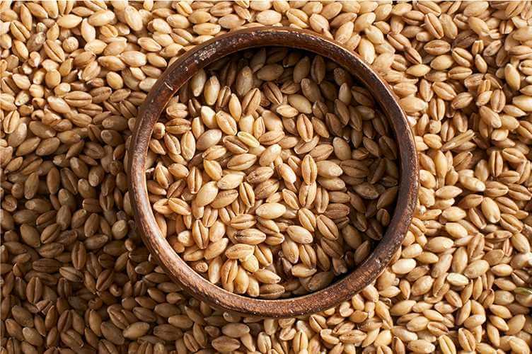 Экспорт зерновых из Украины достиг уровня в 33,8 миллиона тонн
