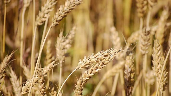 Показатели экспорта зерновых из Украины за текущий МГ