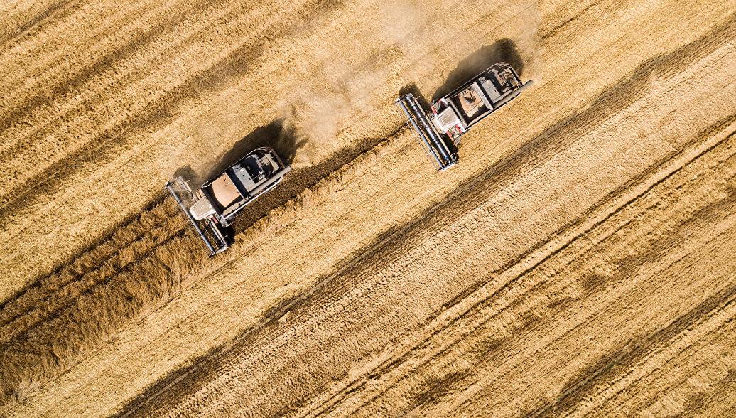 Экспорт аграрной продукции из Украины увеличился на 25%