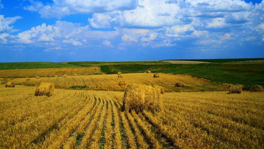 В Акмолинской области урожай зерна наивысший в Казахстане