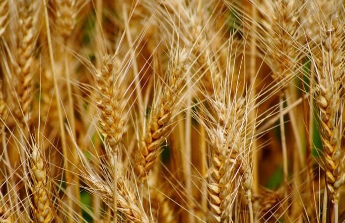 В течении шести месяцев текущего маркетингового года было экспортировано более 21,3 миллиона тонн зерновых