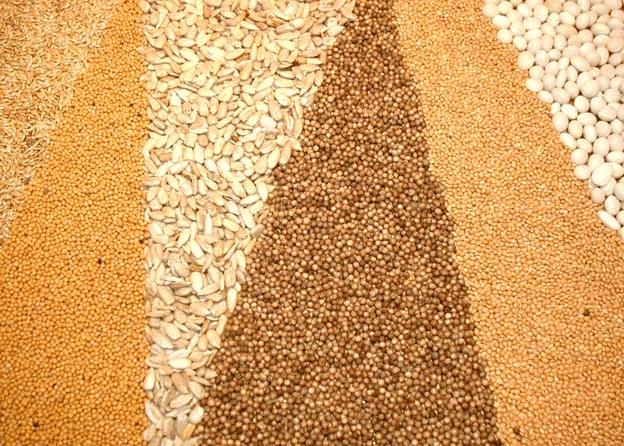 Украина входит в тройку мировых экспортеров зерна