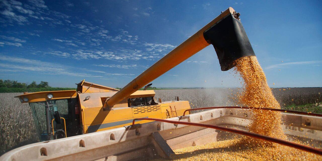В текущем 18/19 МГ экспорт зерна из Украины превысил 41 миллион тонн
