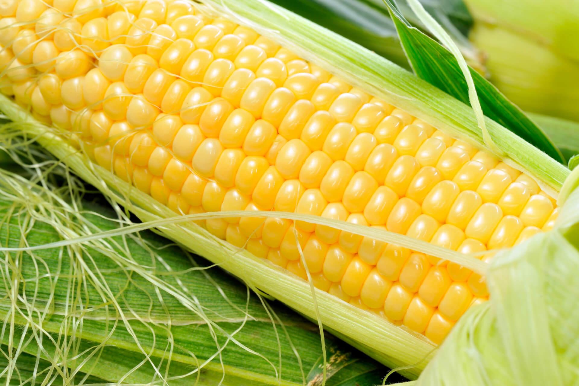 Поставки кукурузы на зарубежные рынки из Украины