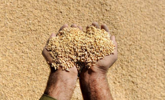 Экспорт аграрной продукции из Украины за 2017 год составил 17,8 миллиардов долларов