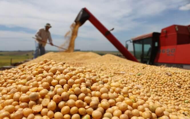 Экспорт сои из Украины вырос на 131 тысячу тонн
