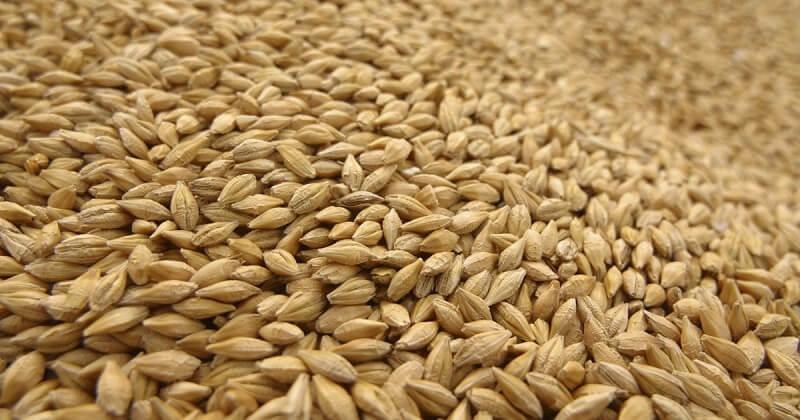 Прогнозы по производству фуражного зерна в мире
