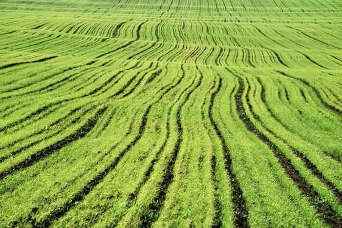 Аграрии Казахстана опасаются за состояние озимых культур