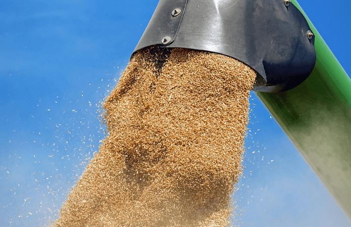 В Казахстане собрали 17,6 миллионов тонн зерна