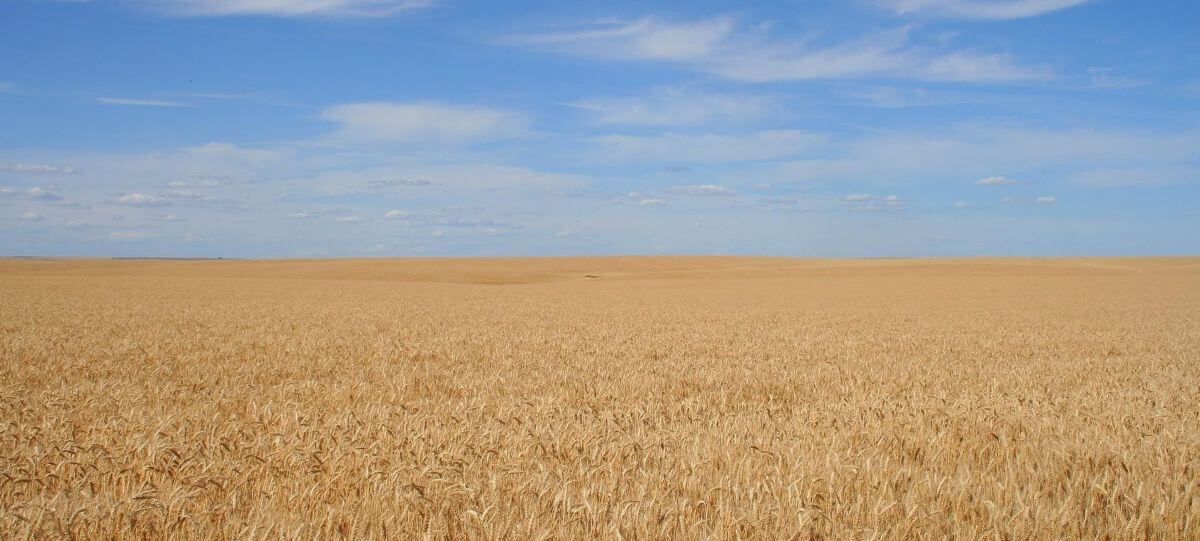 Начало 2017/18 МГ для Украины ознаменовалось снижением экспорта зерновых культур