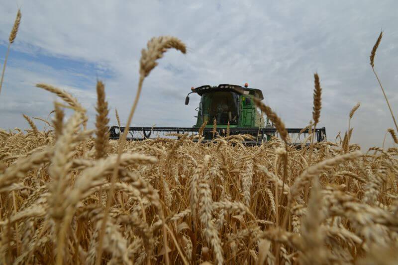 Мировые запасы зерновых увеличатся на 36 миллионов тонн
