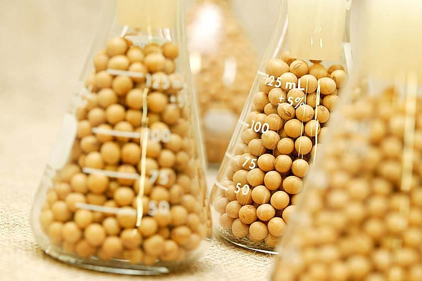 Export of soybean processing products from Ukraine