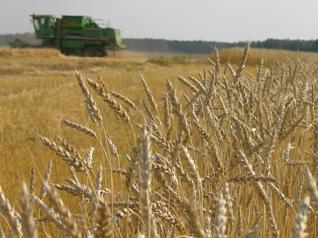 Экспорт зерновых сельскохозяйственных культур из Украины