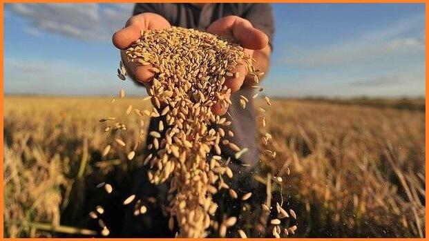 На начало июля 2021 года урожайность зерновых и зернобобовых культур в Украине на 45% превысила урожайность 2020 года
