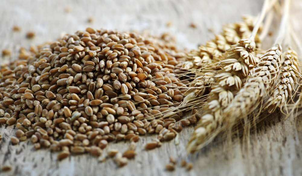 Grain export supplies reached over 12 million tons
