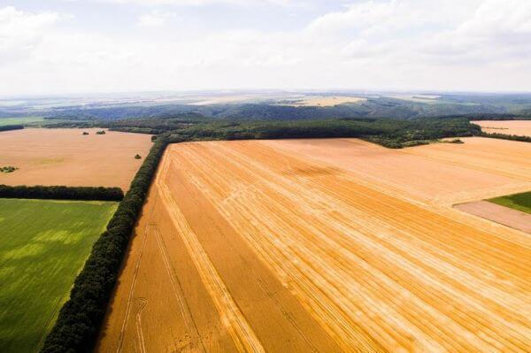 Объем экспорта зерновых из Украины составили 30,000,000 т