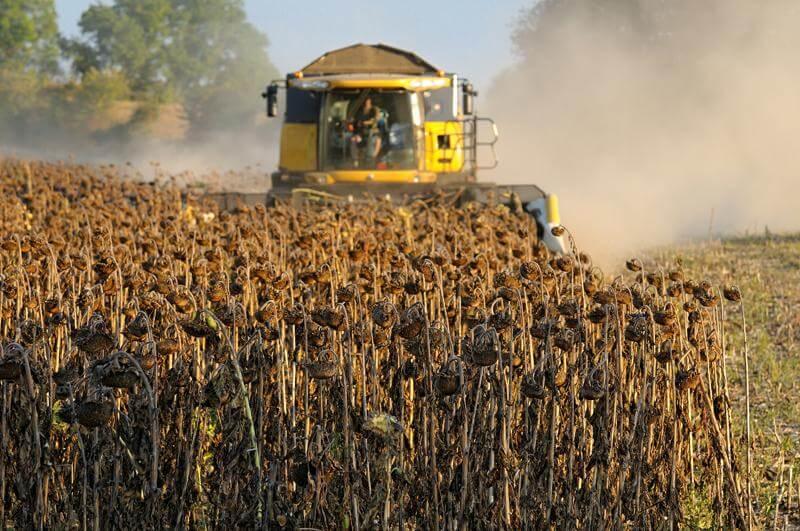 Возможен рост урожая подсолнечника в Украине