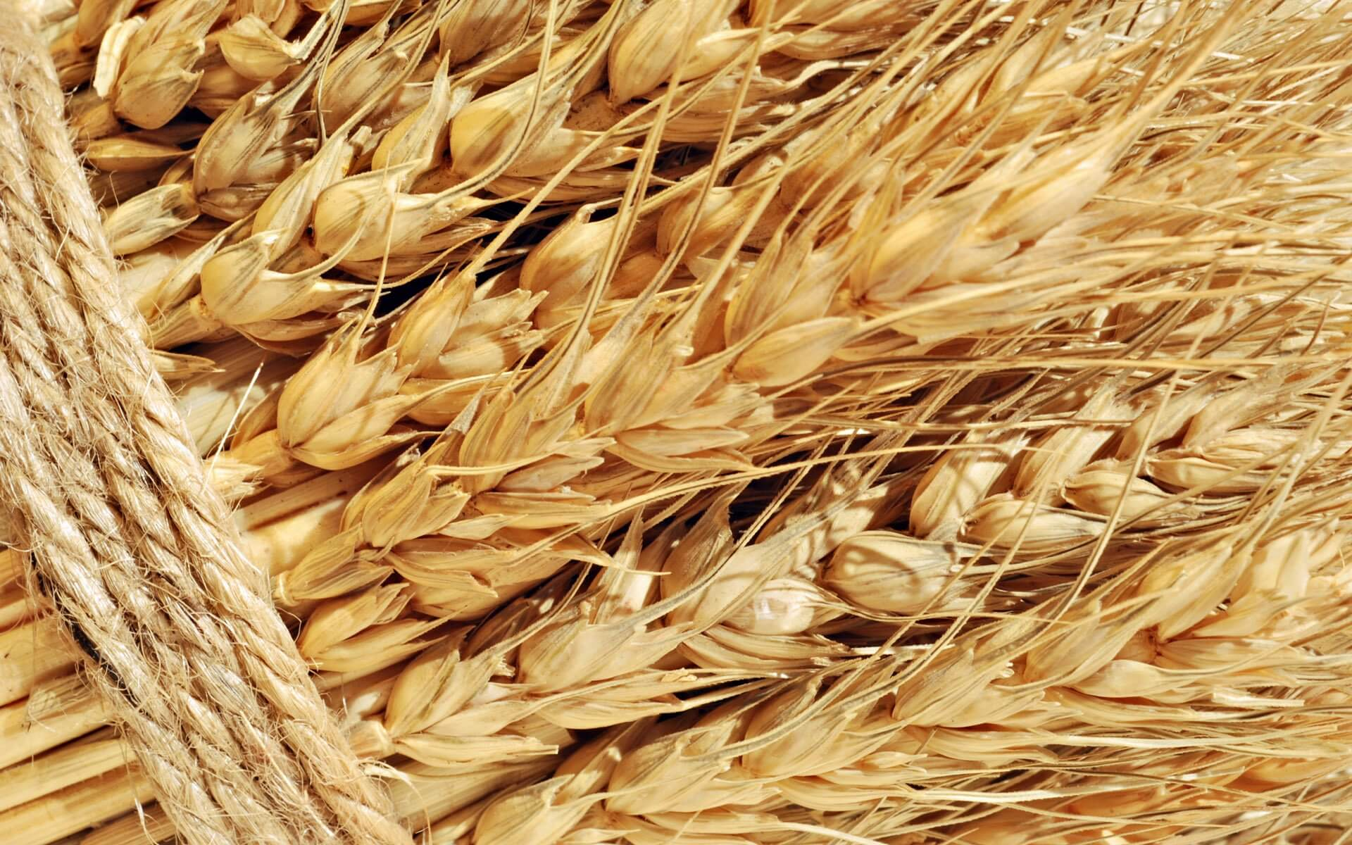 Kazakhstan topped the rating of Altai grain importers in May