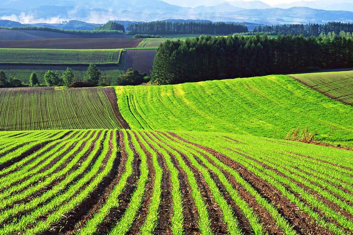 Объемы сбора нового урожая в Казахстане уступают прошлогодним